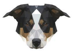 Bloggin´ Dog